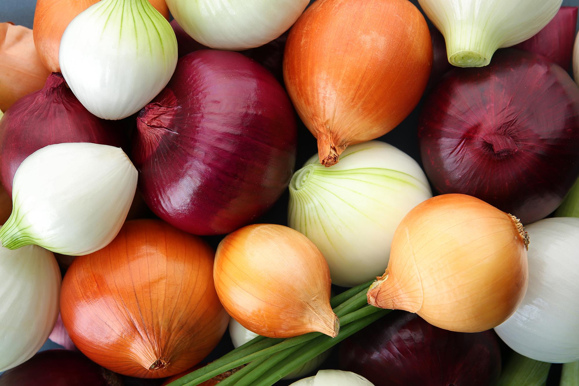 Hort Innovation | Onion Fund